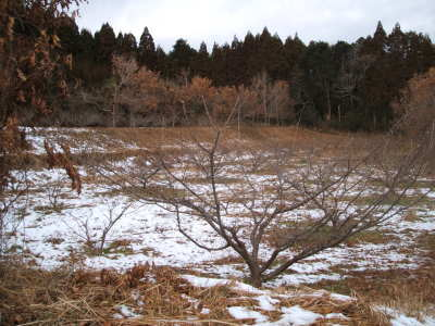 20060106-3.jpg