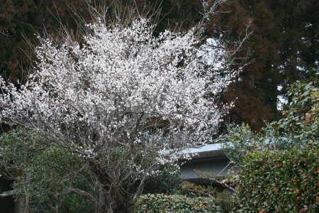 20070208-2.jpg