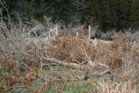 20080209-2.jpg