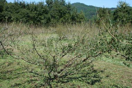 20081016-1.jpg