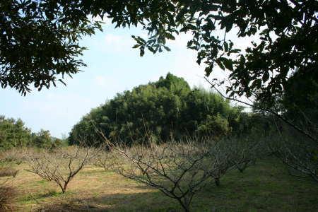 20081020-3.jpg