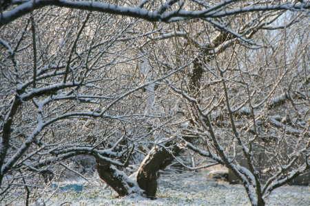20100113-3.jpg